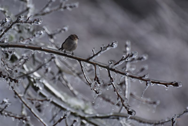 COURTESY PHOTO: CAROL ZYVATKAUSKAS - Schools may be closed Tuesday, but the tree is open for this little bird.