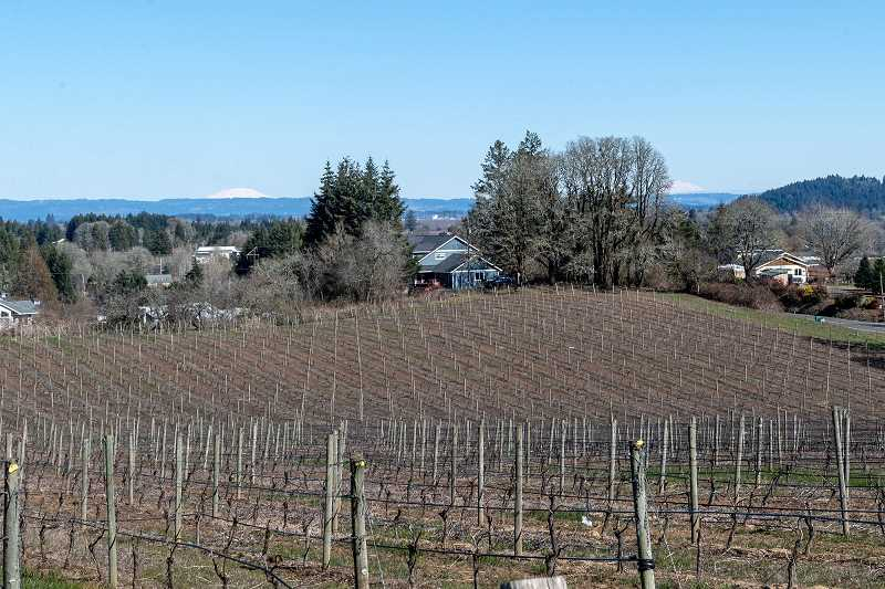 (PMG PHOTO: CHRISTOPHER OERTELL) - Plum Hill Vineyards in Gaston, Ore., on Monday, March 4, 2019. (PMG photo: Christopher Oertell)