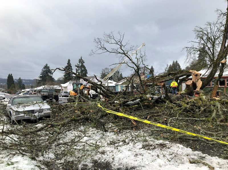 PHOTO COURTESY: KOIN 6 NEWS - A tree goes down in Gladstone over the weekend, severing power to thousands of people in Clackamas County.