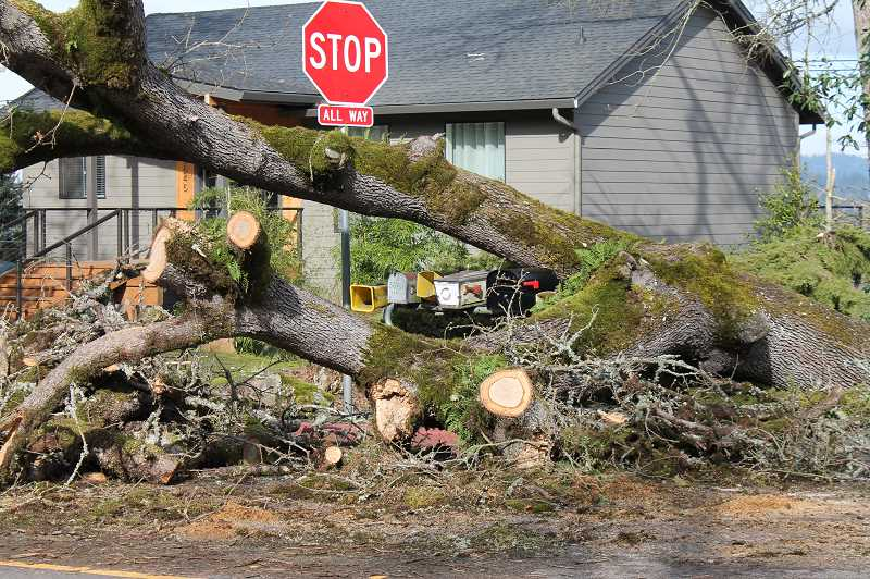 PMG PHOTO: HOLLY BARTHOLOMEW - The weekend's storm knocked down countless trees in West Linn, including this one on West A Street.