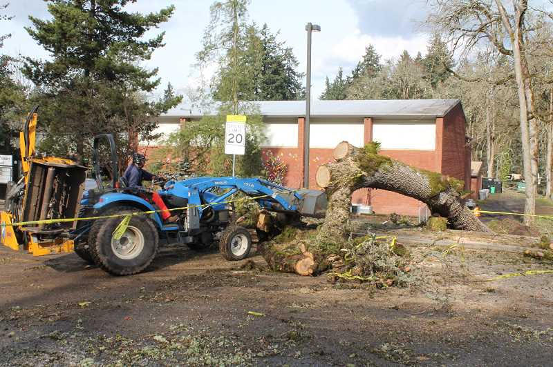PMG PHOTO: HOLLY BARTHOLOMEW - Crews work to remove a downed tree infront of Bolton Primary.
