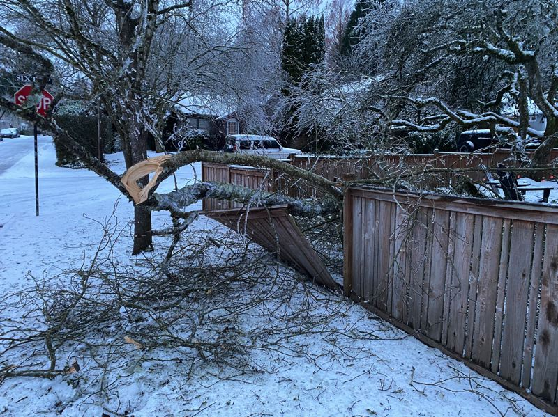 COURTESY PHOTO: MIKE PERHAM - Downed trees cause damage to property throughout Lake Oswego.