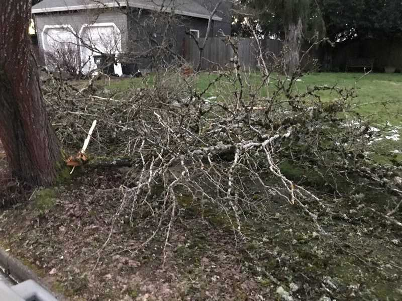 COURTESY PHOTO: CITY OF TUALATIN - Tualatin is offering three drop-off sites at Atfalati Park, Browns Ferry ParkandIbachPark for storm yard debris beginning Thursday.