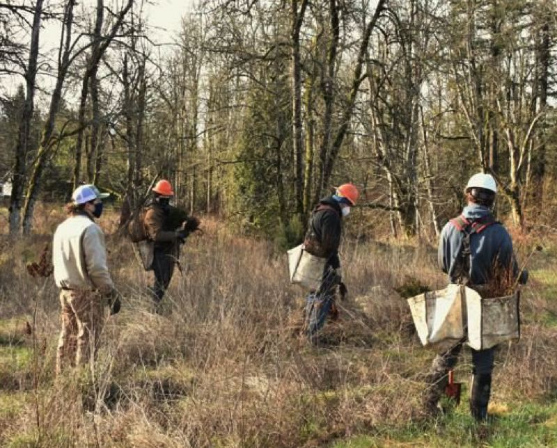 COURTESY PHOTO: EAST MULTNOMAH COUNTY SOIL AND WATER DISTRICT - Lucas Nipp, StreamCare program manager, Alex Staunch, Dave Powell, Ethan Archambault, all of Mosaic Ecology, get to work planting trees.