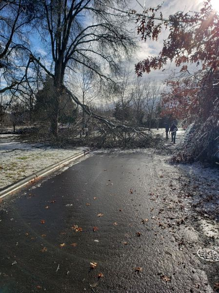 COURTESY PHOTO: CITY OF WILSONVILLE - City of Wilsonville public works staff were tasked with clearing dozens of trees from local roads.