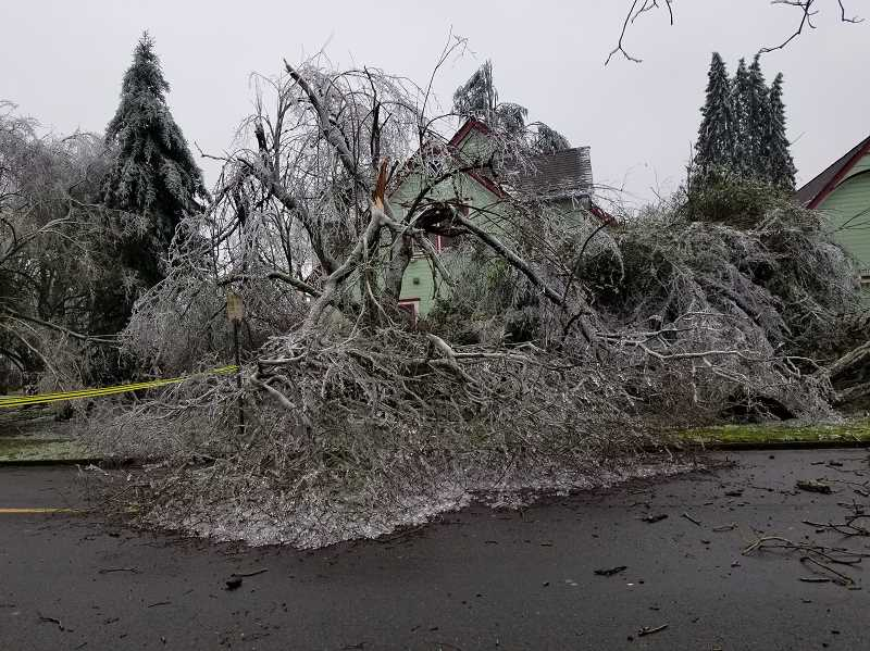 COURTESY PHOTO: RUTH HERMAN WELLS - The corner of 3rd and Garfield streets in Woodburn, like much of the Willamette Valley, incurred significant tree damages from the February 12-13, 2021, ice storm.