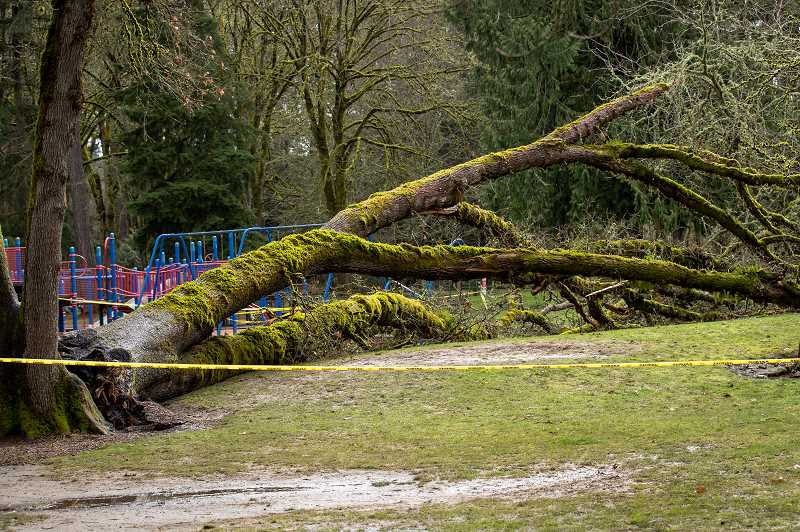 PMG PHOTO: JAIME VALDEZ - A large section of tree came down near a playground area in Cook Park during the ice and snow storms of Feb. 12-14. Among the trees lost in the park was a 150-year-old oak tree.