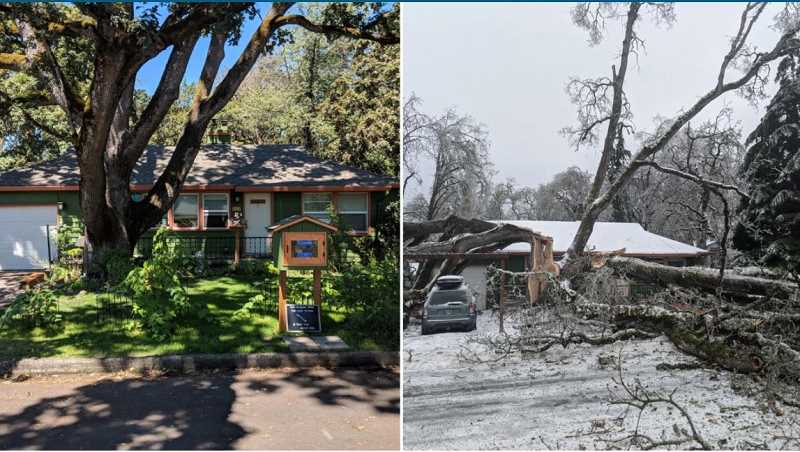 PHOTOS COURTESY: BRYCE COLSON - Before and after photos of a 850-year-old white oak show the contrast of the landscape in Gladstone following the winter storm.