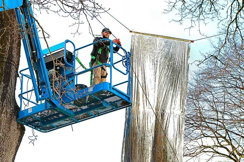 DAVID F. ASHTON - Riding a personnel lift, high in the mighty oak trees at Oaks Park, here's Jeramie Shane, Principal at Mayer/Reed Landscape Architects - securing a Mylar banner.