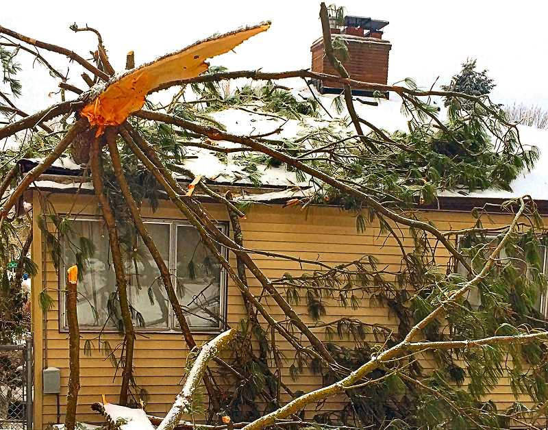 "COURTESY OF KELLY LASLIE - Friday night, February 12, a large section of a sugar pine tree gave in to the weather and fell on this house at 4345 S.E. Rex Street, causing no injuries, but severe damage to the structure. Neighbor Kelly Laslie shot the photo, and says that he and his neighbors had been trying to remove the tree for 13 years, as a potential hazard – but the City Forester kept refusing to approve it, ""contradicting a private arborist, and considering it healthy""."