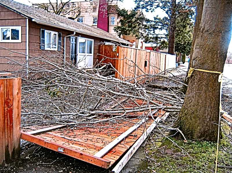 ERIC NORBERG - Large street trees next to a triplex on the southeast corner of Ellis and S.E. Milwaukie Avenue did not fare well in the ice and snow; falling branches, a couple of them rather large, knocked over a section of newly-built fencing, and blocking a hundred feet of sidewalk.