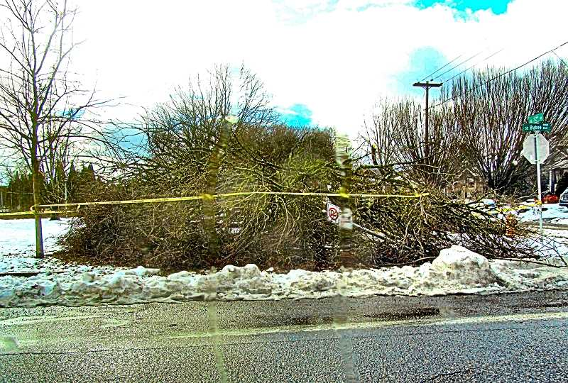 ERIC NORBERG - This was once, we believe, a tree (and also a no-parking sign) – both evidently victims of the Valentine's Weekend ice and snow storm. It was on the north end of Westmoreland Park, on Bybee Boulevard at 22nd, across from PF&R Fire Station 20.
