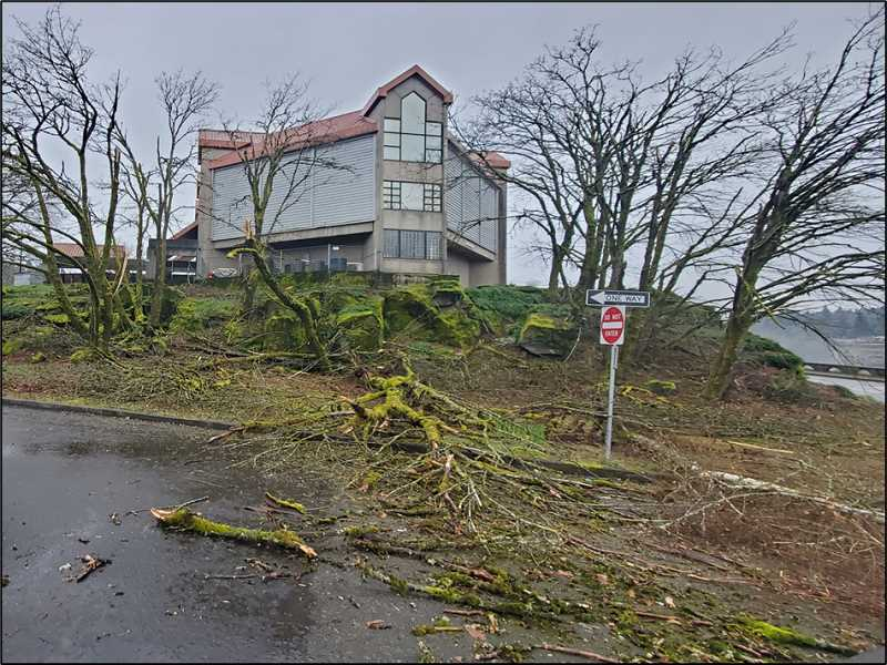COURTESY PHOTO - The grounds around the Museum of the Oregon Territory received plenty of damage during the ice storm.