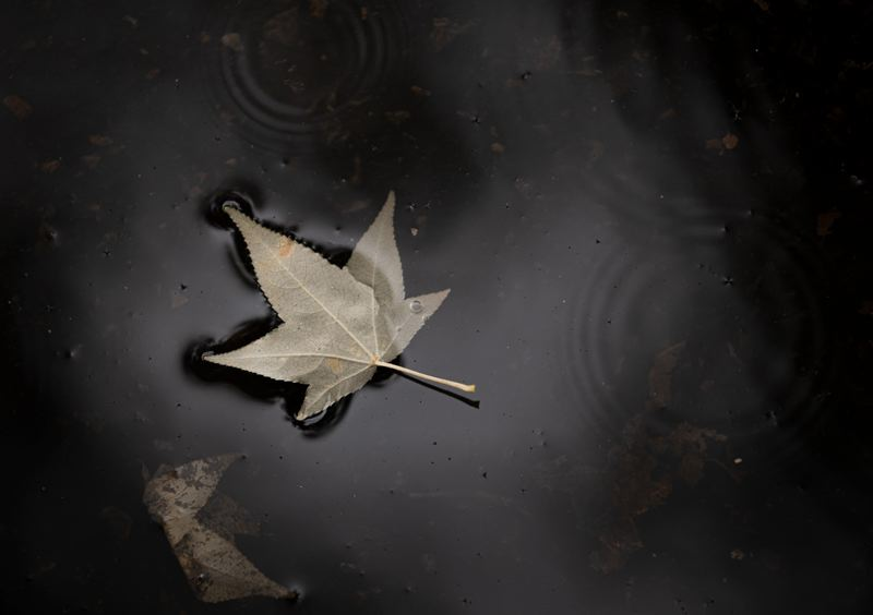 MULTNOMAH COUNTY PHOTO: MOTOYA NAKAMURA - A fallen leaf floats in murky water in 2019. Oregonians have a similarly bleak outlook toward the state's future.