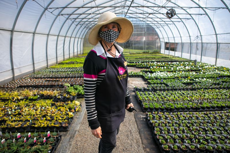 PAMPLIN MEDIA GROUP: JAIME VALDEZ - Deby Barnhart has owned and operated the Cornell Farm garden center with her husband Ed Blatter since 1987. Sales were up 42% in 2020 because of the house plant craze and then the pandemic stay-at-home culture. The company grows plants on site in several greenhouses on the edge of Portland, and  65% of what it sells are grown in house, the rest coming mostly from Willamette Valley growers.