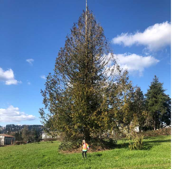 COURTESY PHOTO - Lindsay Freedman's daughter, Livia, poses in front of a large tree at Justice Park.