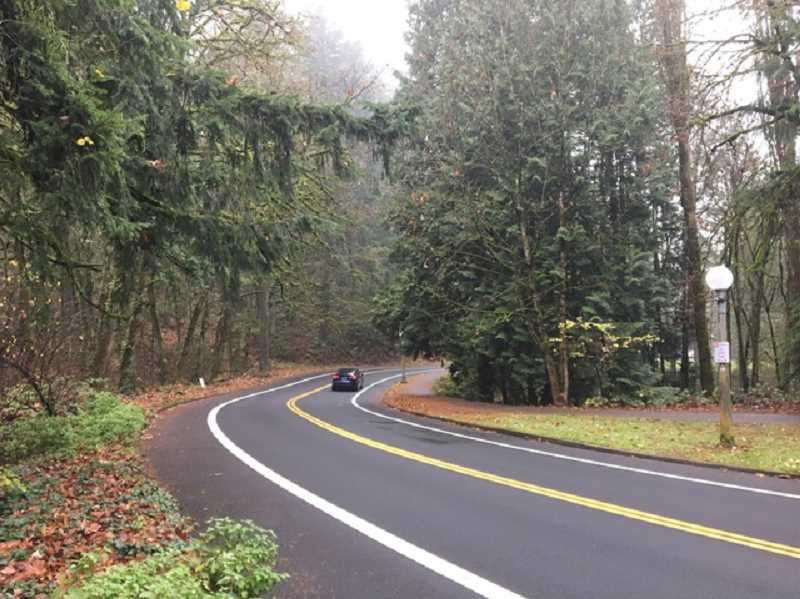 COURTESY PHOTO: FRIENDS OF TERWILLIGER - Terwilliger Boulevard, known for its winding curves and lush  roadside, connects downtown Portland to the Southwest hills.