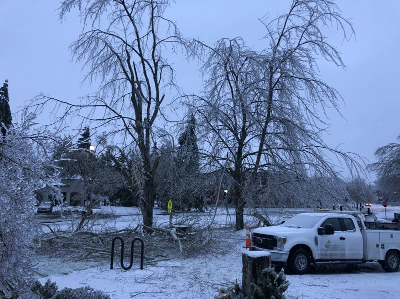 COURTESY PHOTO: CITY OF WILSONVILLE - Damage to Wilsonville's tree canopy during the recent ice storm was extensive and the city is planning how to account for it.