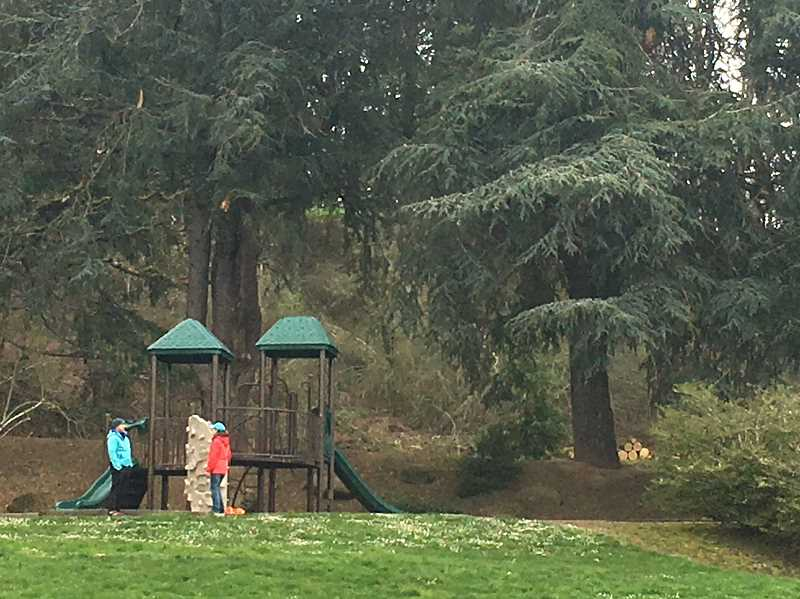 COURTESY PHOTO - Six cedars are proposed for removal about 20 feet behind a playground, which would lose the protection and natural barrier from the off-leash dog area.