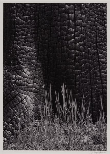 PHOTO: ANSEL ADAMS - Ansel Adams's abstract and environmentalist eyes met in his late work on forest fires.