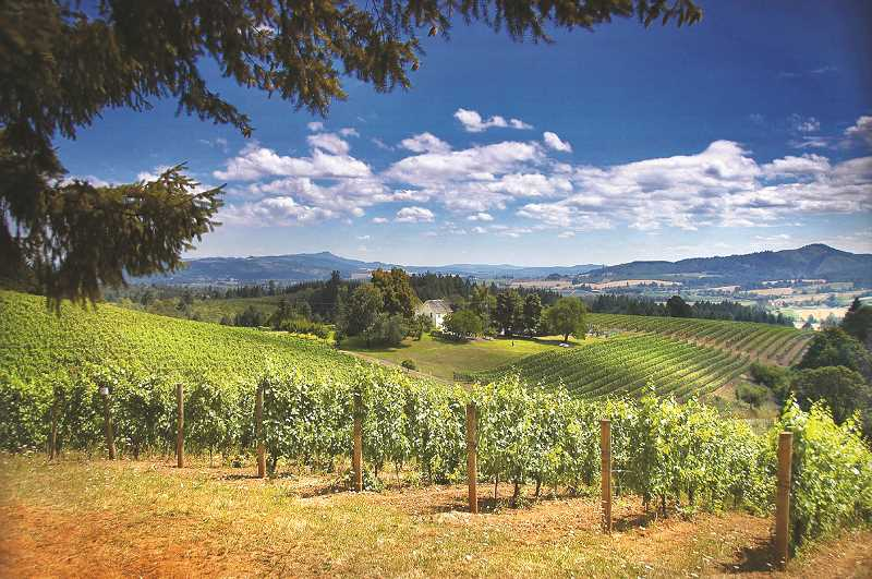 PMG FILE PHOTO -  For many an Oregon wine industry challenged by the pandemic and the ensuing economic strife, there is a sense of optimism.