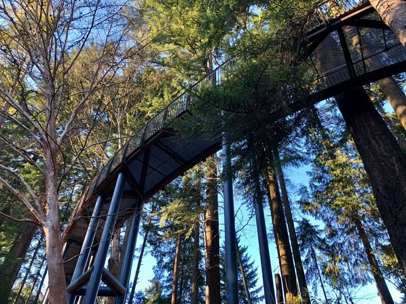 COURTESY PHOTO: PORTLAND PARKS & RECREATION - A new aerial walkway has been added to Leach Botanical Garden, offering never before seen views.