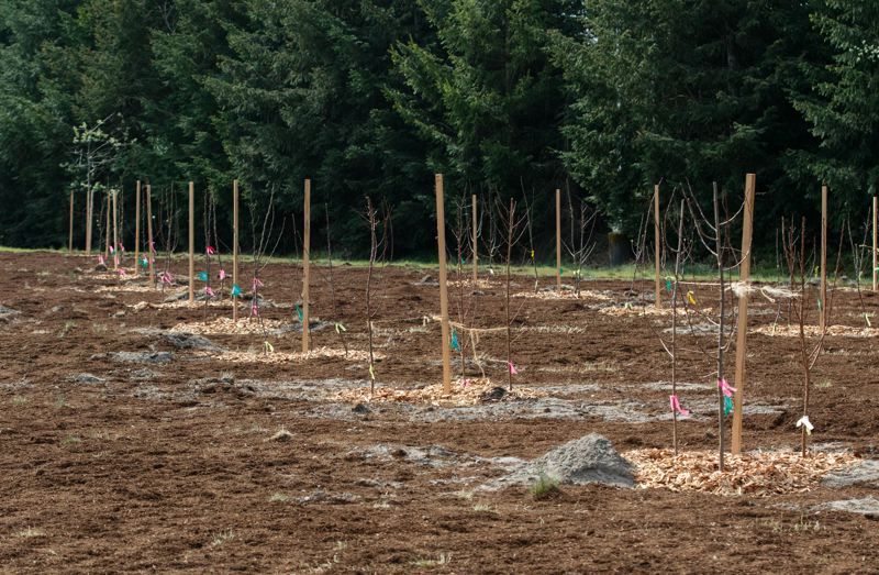 PMG PHOTO: JONATHAN HOUSE - New plantings at the Bybee Lakes Hope Center Victory Garden.