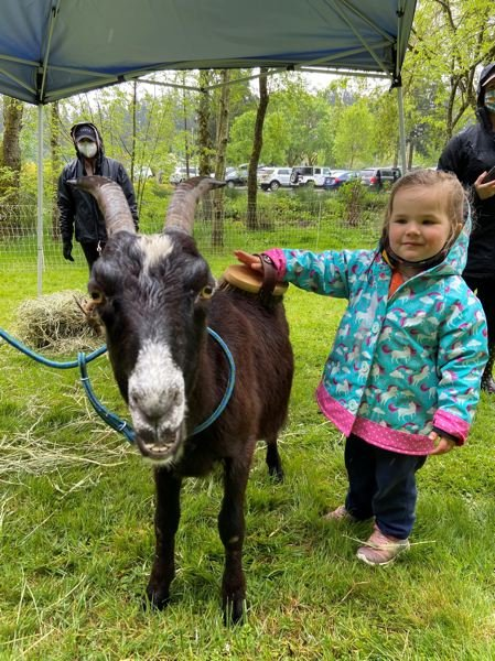 COURTESY PHOTO: CITY OF WILSONVILLE  - Anna pets one of the goats with WestSide Goat Girl.