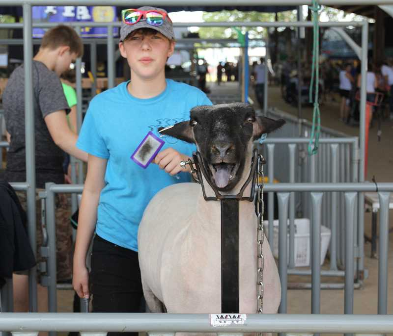PMG PHOTO: JUSTIN MUCH - Oliver Taylor of Gervais preparing his sheep for a show at the 2019 Marion County Fair.