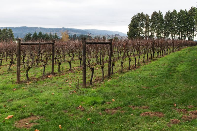 PMG FILE PHOTO - A winery's shipment of pinot gris was reportedly stolen in Forest Grove last week.