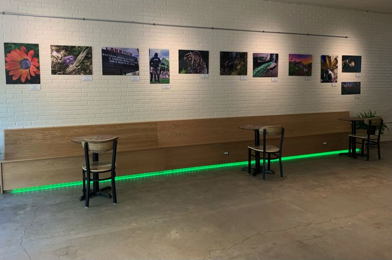 COURTESY PHOTO  - There are 21 pieces of art on display at Morse Coffee Company.