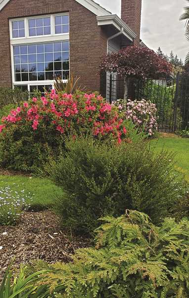 PMG PHOTO: DONNA BRYANT - The Cooperrider home on 21st Avenue in Canby has been tabbed the Yard of the Month by the Canby Garden Club.