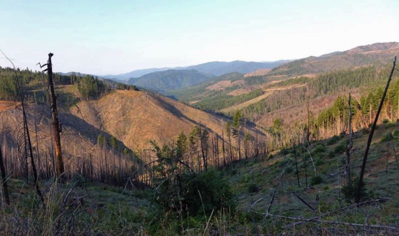 COURTESY PHOTO: OPB, JES BURNS - Oregon acreage shows 'checkerboard' damage in southwest Oregon four years after the Douglas Complex Fire of 2013.