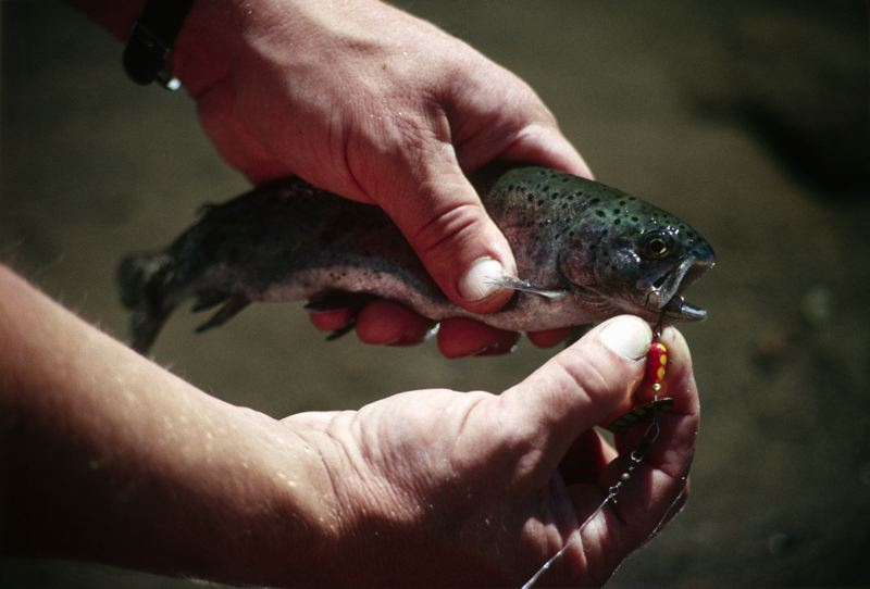 COURTESY PHOTO - There are multiple opportunities for fishing along the Clackamas River.