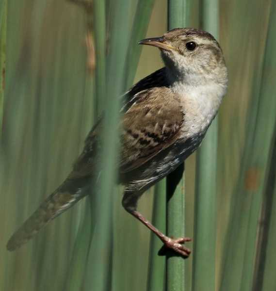 June the best time for birdwatching