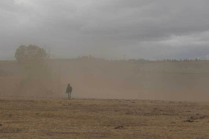 PAT KRUIS/MADRAS PIONEER - Governor Kate Brown declared a drought emergency for Jefferson and Deschutes Counties along with eight other counties. Farmers in Jefferson County have only enough water to plant half their fields. The winds blow away the topsoil from their fallow fields.