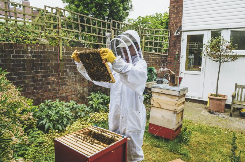METRO CREATIVE - The art of beekeeping has become an important endeavor, and just about anyone with some time and resources can start their own apiary.