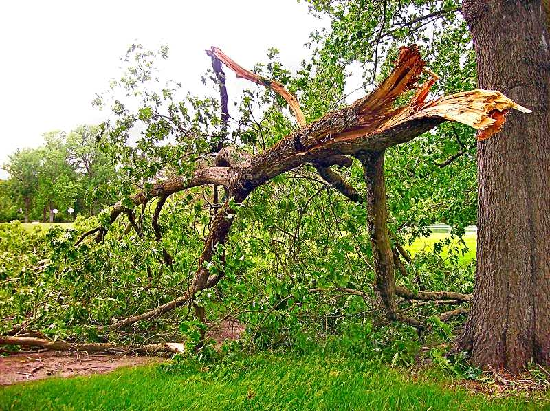 RITA A. LEONARD - The latest large oak limb to break off along McLoughlin Boulevard fell in late June - but onto the margin of Westmoreland Park this time, and not again across the highway.