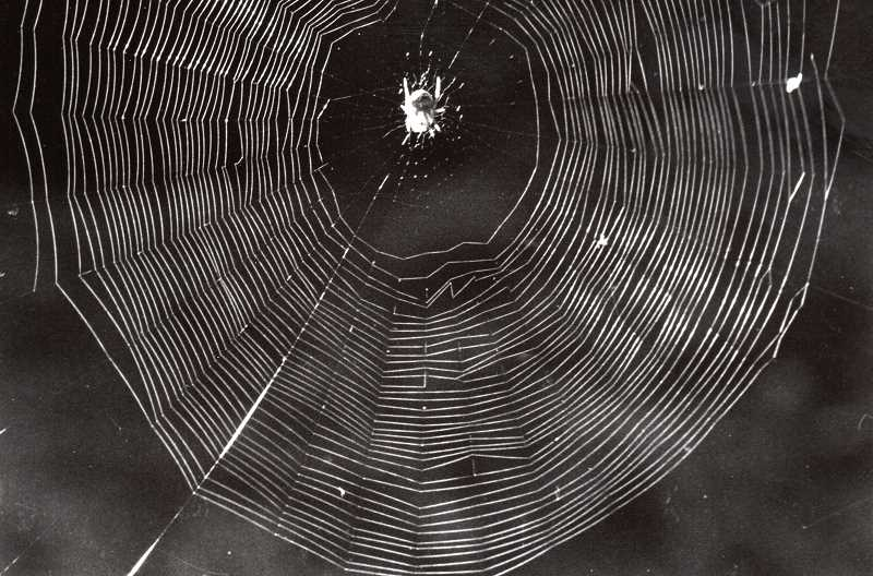 COURTESY PHOTO - A spider weaved its intricate web as this writer looked on.