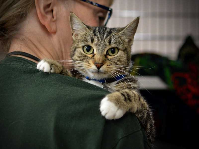 COURTESY PHOTO: CAT - Best Friends Animal Society, a leading animal welfare organization, recently praised Sherwoods Cat Adoption Team for its live-release rate.