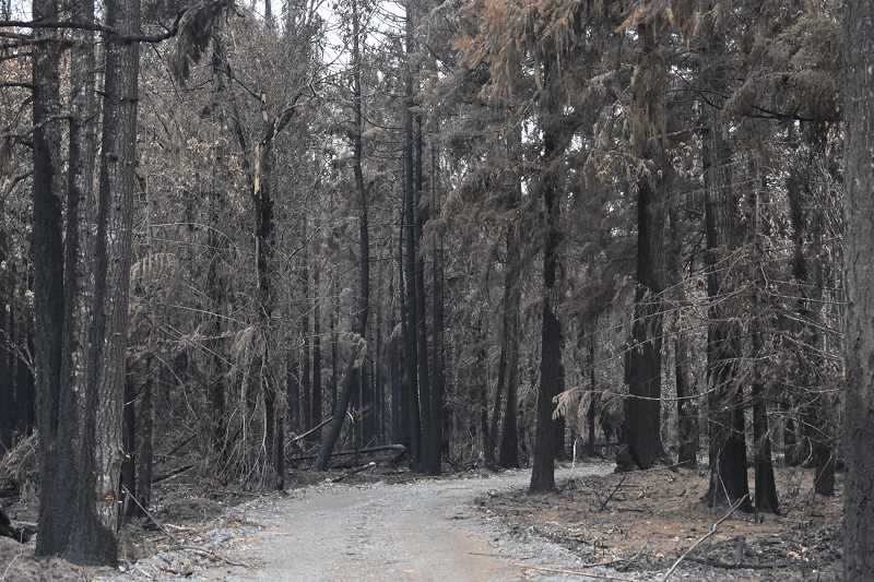 PMG PHOTO: EMILY LINDSTRAND - Trees near Eadon Road in unincorporated Clackamas County were left charred as a result of the Dowty Road Fire.