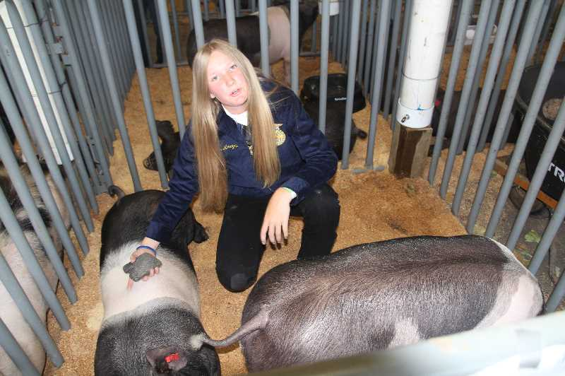 PMG PHOTO: JUSTIN MUCH - Addi Arnzen, 14, of the Gervais FFA prepares for the swine show in the animal bard at the Marion County Fair Friday, July 9, 2021. This year's fair will feature different animals each day.