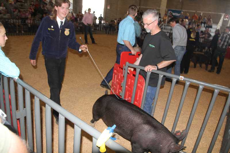 PMG PHOTO: JUSTIN MUCH - Wyatt Bean of St. Paul participates in the swine show at the Marion County Fair Friday, July 9, 2021. The fair will feature different animals each day through the weekend.