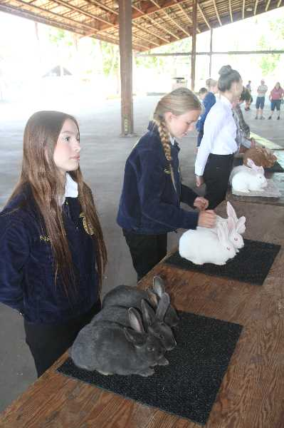 PMG PHOTO: JUSTIN MUCH - Local FFA members show rabbits at the Marion County Fair. This years Marion County Fair will feature different farm animals each day.