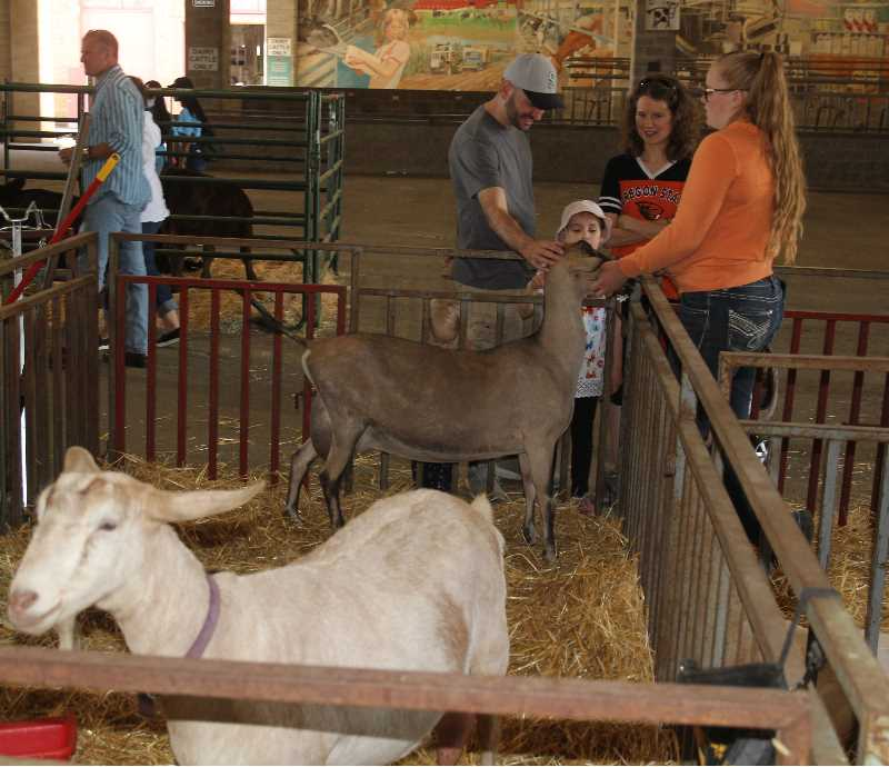 PMG PHOTO: JUSTIN MUCY - Meeting the goats in the animal barn at the 2021 Marion County Fair.