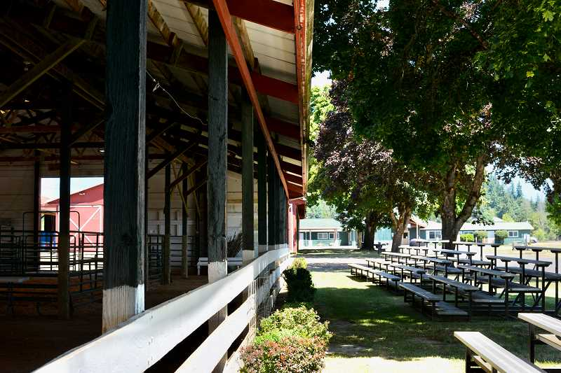 PMG PHOTO: ANNA DEL SAVIO - Livestock auctions will be set up a little differently this year, with attendees seated on bleachers outside barns.