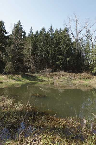 COURTESY PHOTO: CLACKAMAS COUNTY - Not your typical flat farmland, the undeveloped tract dedicated as a park is hilly, wooded and tranquil.