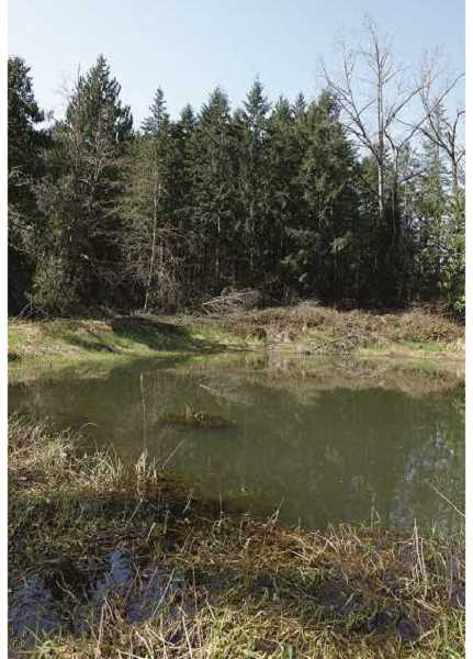 COURTESY PHOTO: CLACKAMAS COUNTY - Not typical flat farmland, the undeveloped tract of land donated to the county by the Wettens will be a park with hills and wooded areas.