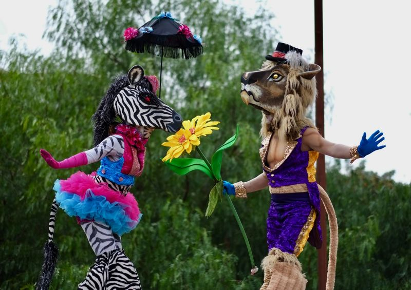 COURTESY PHOTO: ANIMAL CRACKER CONSPIRACY - Artists and performers Bridget Rountree and Iain Gunn of Animal Cracker Conspiracy don African animal costumes as part of their stilt walking act that will be at the Washington County Fair.