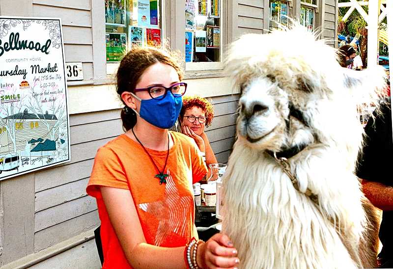 DAVID F. ASHTON - Coming from just down the street to the Sellwood Community House Rose Fête, and petting Caesar, the No Drama Llama, is Northwest Academy student Teagan Rork.